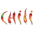 Red chili pepper isolated on white background vector image