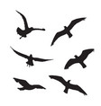 seagull set silhouettes on the white background vector image