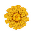 yellow isolated flower vector image