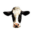 black and white cow head portrait from a splash vector image vector image