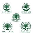 eco green oak tree logo design vector image