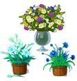 houseplants in pot bouquet of wildflowers in vase vector image vector image