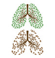 human lungs with foliage concept vector image