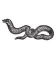 moray eel vintage vector image