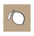 whole shiny ripe lime with a leaf vector image vector image