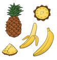 with juicy tropical fruits vector image vector image