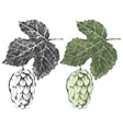 Hand drawn hop brunches vector image