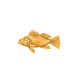 Black Sea Bass Drawing vector image vector image