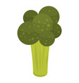 broccoli cabbage icon isometric style vector image vector image