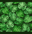 monstera leaves seamless tropical background vector image vector image