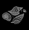 set of shells in ethnic tribal boho style with vector image