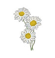 hand draw of flower on a white background vector image vector image