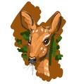 Hand drawn of Deer in sketch style vector image