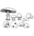 champignons set collection whole and cut into vector image