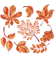 Collection beautiful colourful autumn leaves vector image