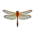 dragonfly from a splash watercolor colored vector image vector image