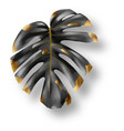 tropical black and gold monstera leaf vector image