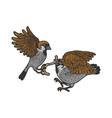 birds fight warm sketch