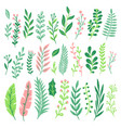 decor leaves green plant leaf ferns greenery and vector image vector image