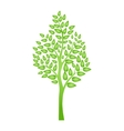 Green tree isolated on white for your design vector image vector image