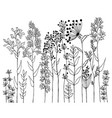 hand drawn of design wildflowers floral vector image vector image