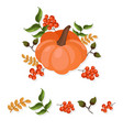 pumpkin decor autumn harvest vector image vector image