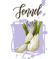 vegetable food banner fennel sketch organic food vector image