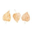 set golden leaves skeletons fallen foliage vector image