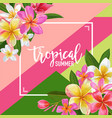summertime floral poster tropical exotic plumeria vector image