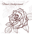 rose hand drawn vector image
