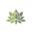 lotus green logo vector image vector image