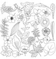 botanical elements with hand drawn flowers vector image