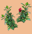 drawn isolated green plants with red flower vector image vector image