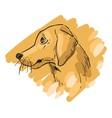Hand drawn of gold retriever dog vector image