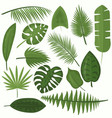 set tropical green leaves vector image vector image