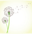 summer dandelion with wind blowing flying seeds vector image vector image