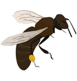 bee in fly vector image vector image