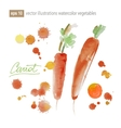 carrot watercolor painting on white background vector image