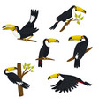 collection toucans isolated on a white vector image