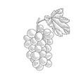 drawing grape vector image