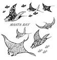 manta ray and fish vector image vector image