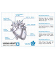 medical cardiology infographic template vector image vector image