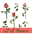 beautiful floral set of rose flowers vector image vector image