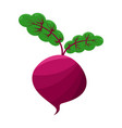 purple beet isolated on white background vector image vector image