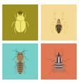 assembly flat bug scarab araneus bee vector image vector image