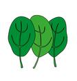 Cartoon of green fresh spinach Vegetarian food vector image vector image