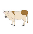 cow drawing which stands vector image