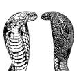 King Cobra Set vector image vector image