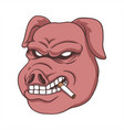 pig smoke vector image
