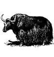 yak bos grunniens vector image vector image